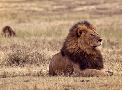 Victoria Falls and Serengeti Adventure - Ngorongoro Crater Wildlife Safari Drive