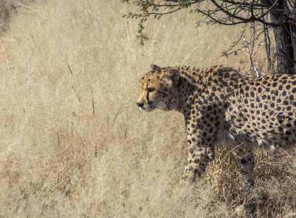 Southern Africa Highlights - Cheetah Conservation Experience