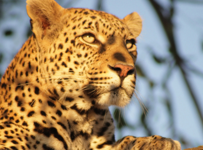 Southern Africa Highlights - Carnivore Conservation Experience