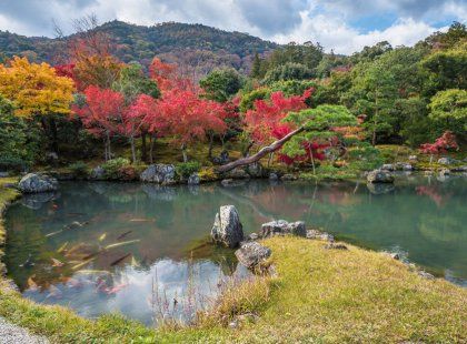 Explore Kyoto's famous temples and Zen gardens, resplendent with cherry blossoms in spring and amber leaves in fall, meticulously and purposely crafted centuries ago.