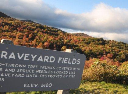 Graveyard Fields is a fascinating area. Your local guides will share how this area was transformed by fire.