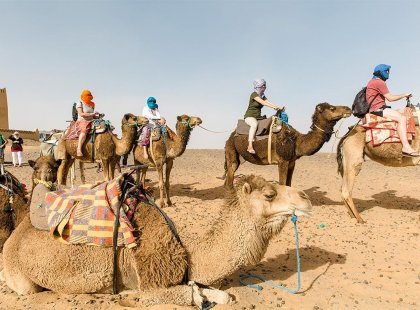 Travellers sitting on camels in Sahara Desert, Morocco