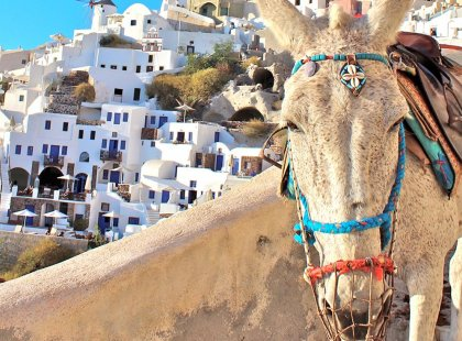 greece santorini donkey