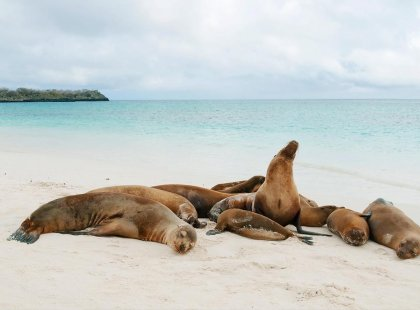 Group of sea lions sleeping on beach, Galapagos Islands